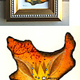 かんむり座/Corona Borealis